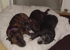 Bridie, Chancy & Nellie (1).jpg
