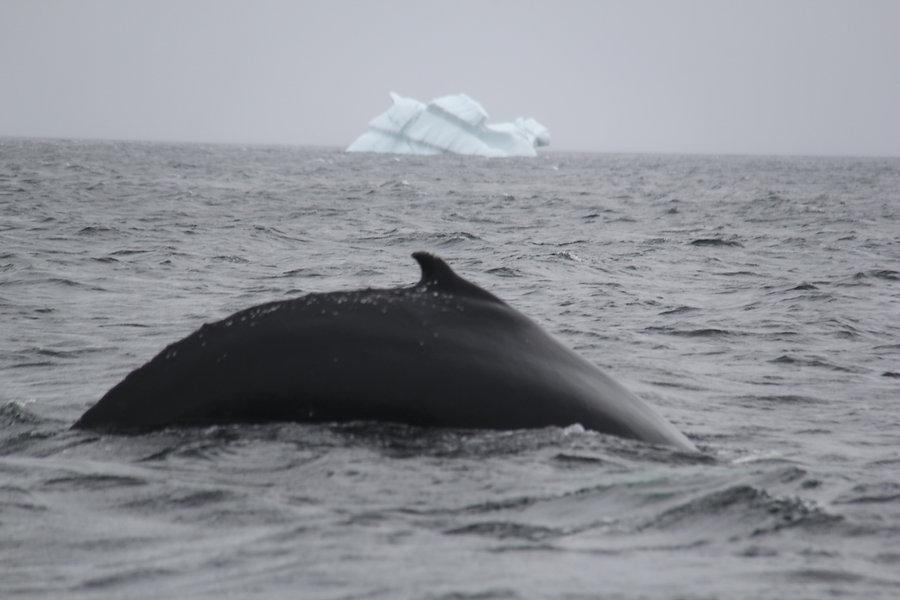 whale and iceberg.jpg