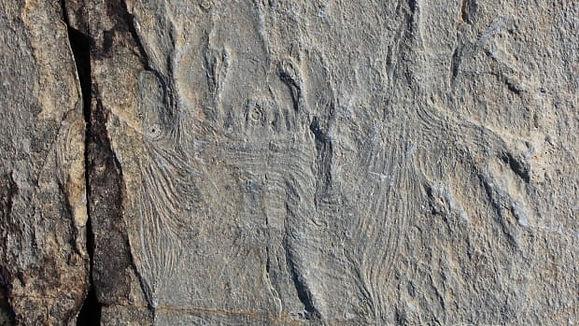 haootia-quadriformis-fossil.jpg
