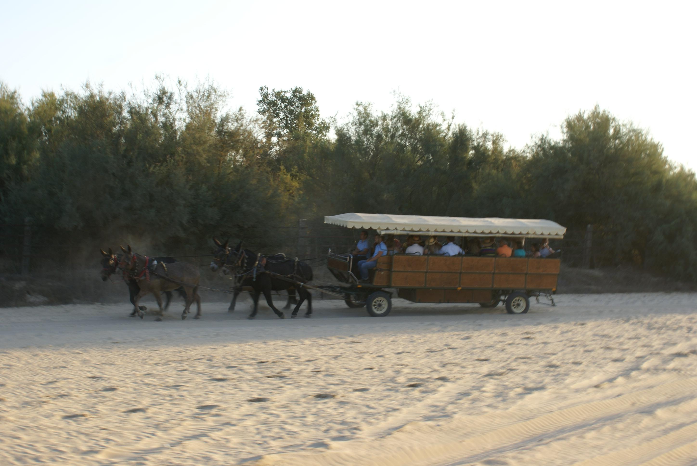 Carro peregrinación