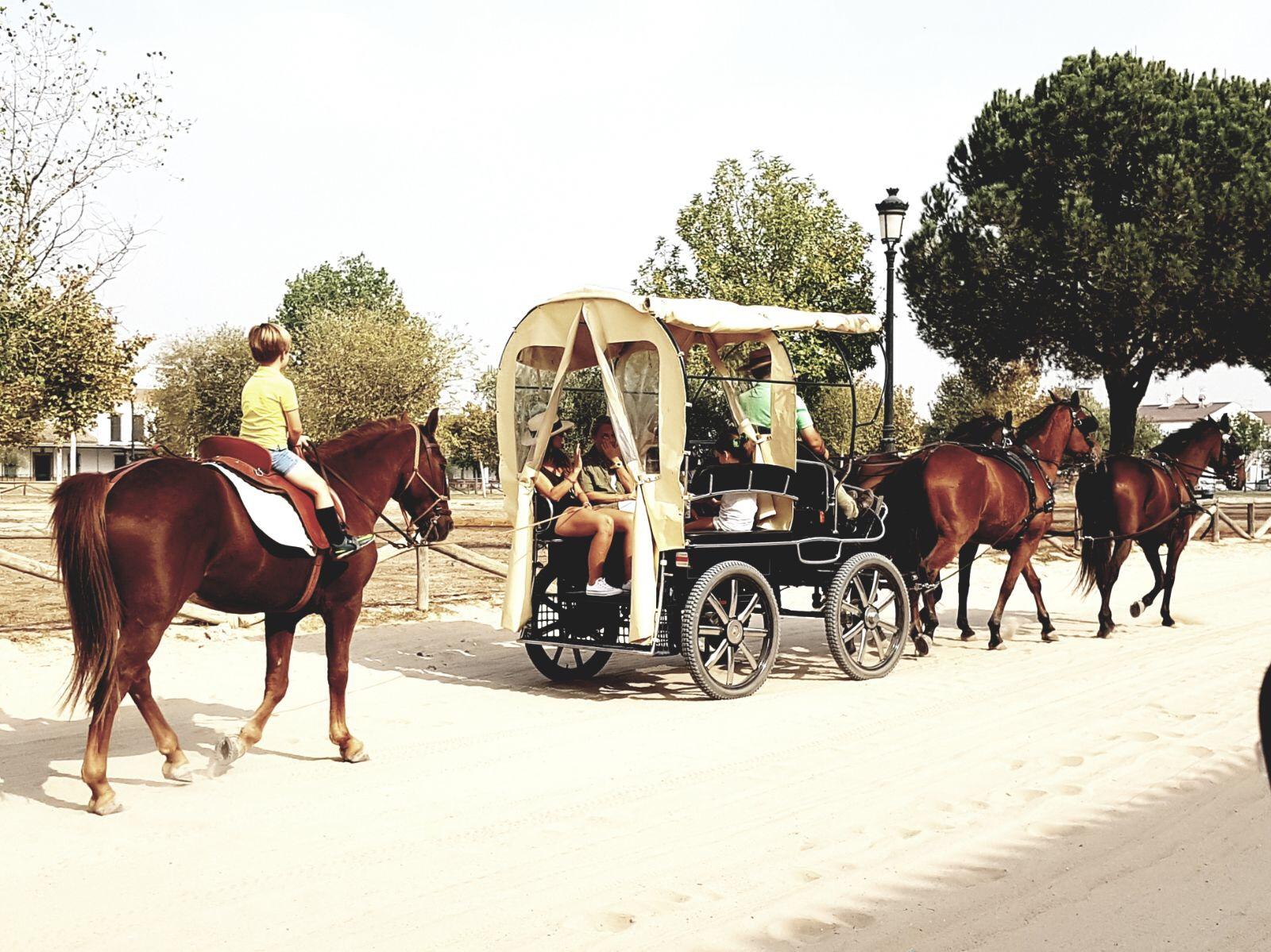 Caballo y Carro por El Rocío
