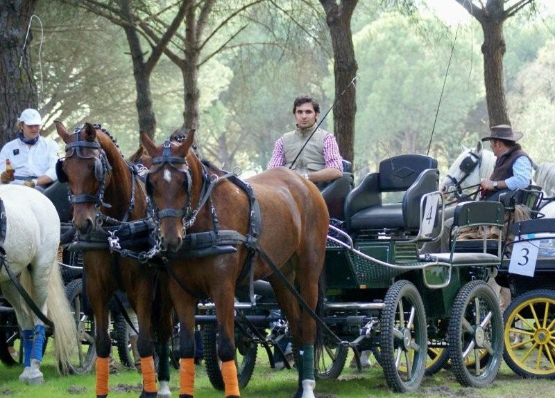 Coche caballo Doñana