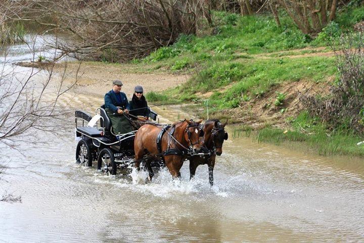 Paseo a caballo Quema