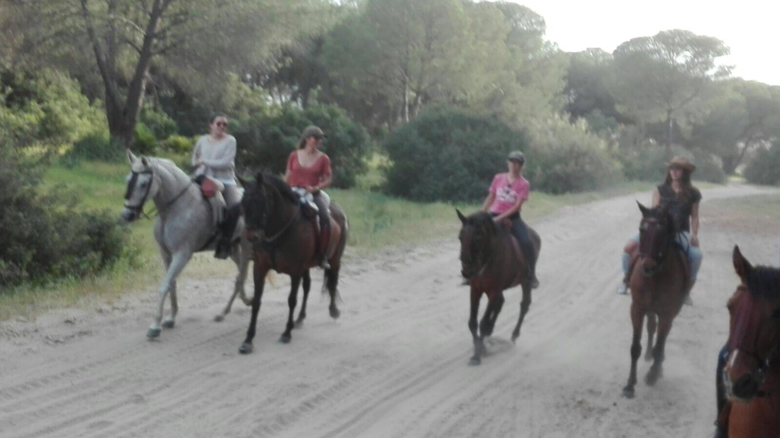 Paseo caballo Doñana