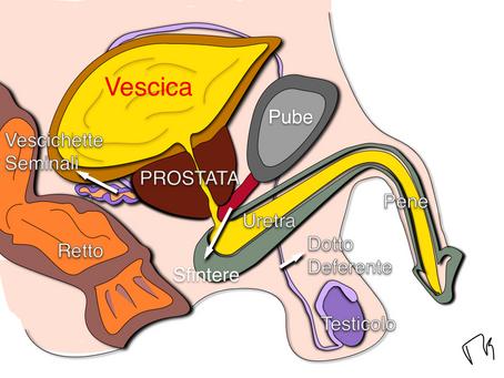 La Visita Urologica: ma è così terribile? E perchè bisogna farla?