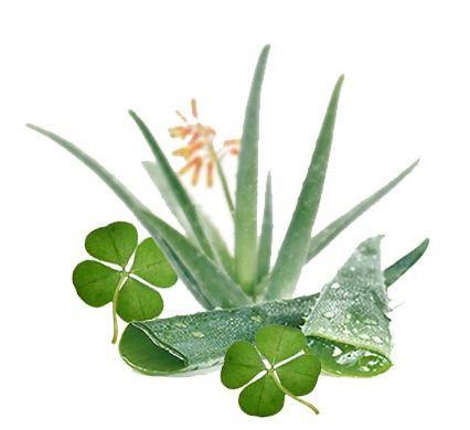 Aloe & Green Clover Tarts