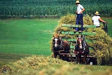 Amish Harvest Tarts