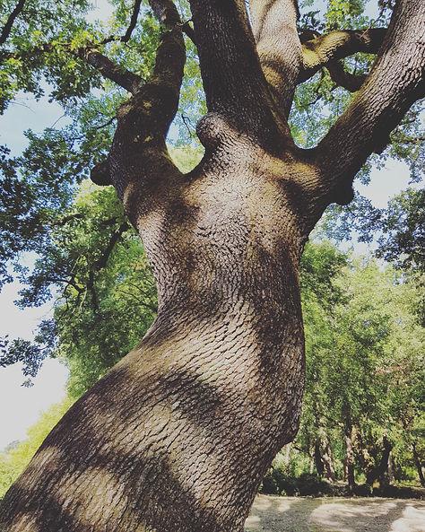 kinesiologie arbre nature aide corms accompagnement therapie aide reiki soins energetique studio syma les granges gontardes drome 26 rhone alpes studio syma les granges gontardes gard vaucluse ardeche paca reconnu