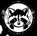 the hungry raccoon