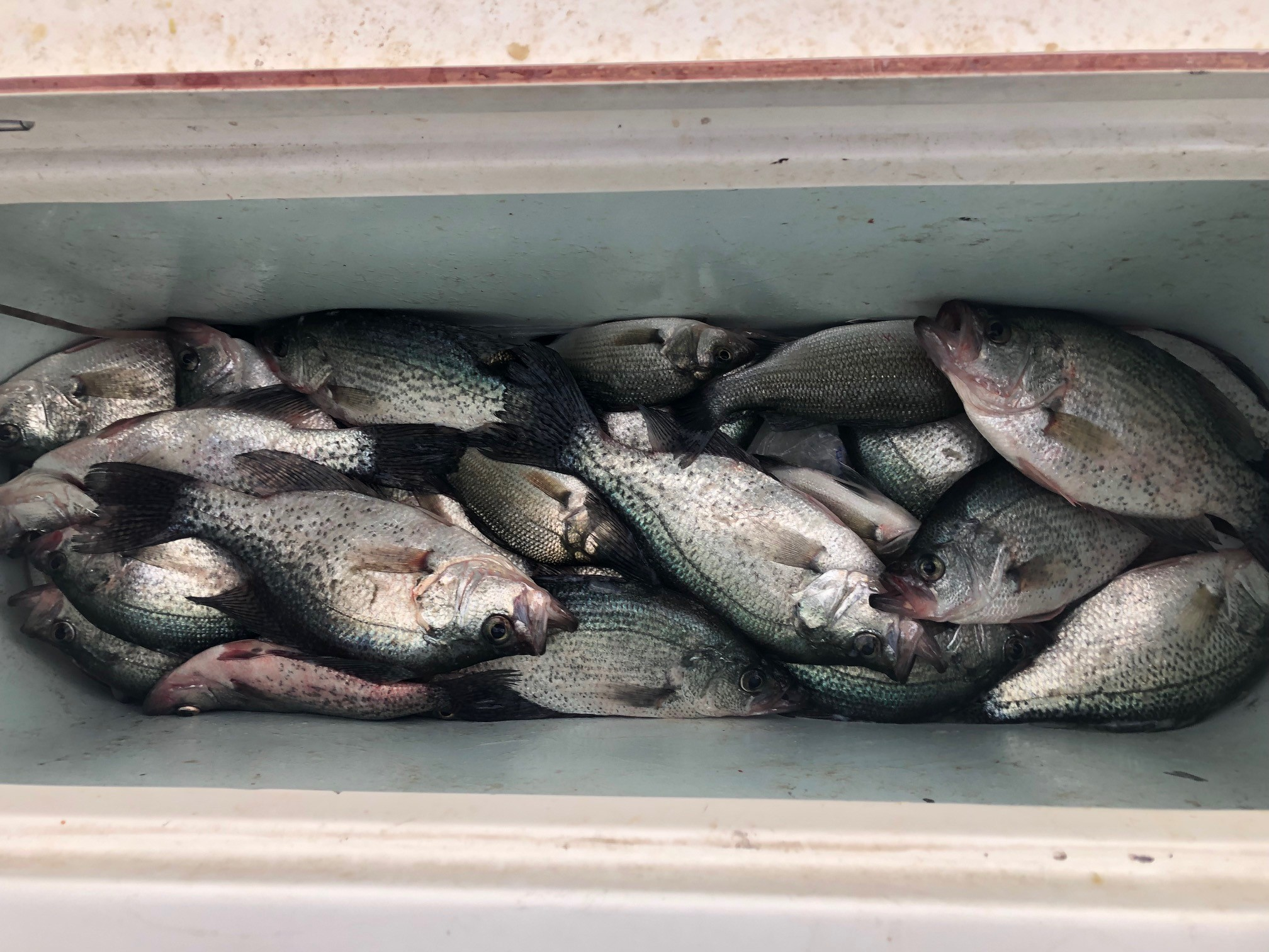 Lake Wateree Crappie