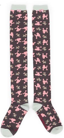 Powder - Poodle/Westie Long Socks