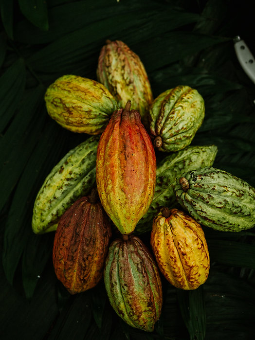 Cacao Source Retreat-635.jpg