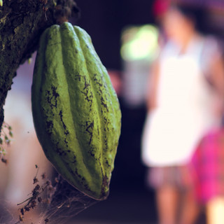 Cacao Source Trip_57.jpg