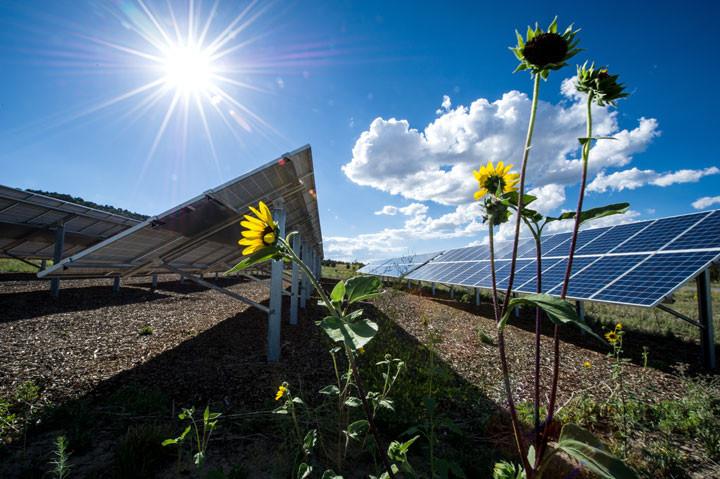 SolarFarm26962_720.jpg