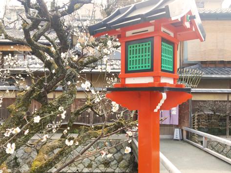 「祇園あきしの」たより No.25 2020年2月26日号 女将の祇園日記