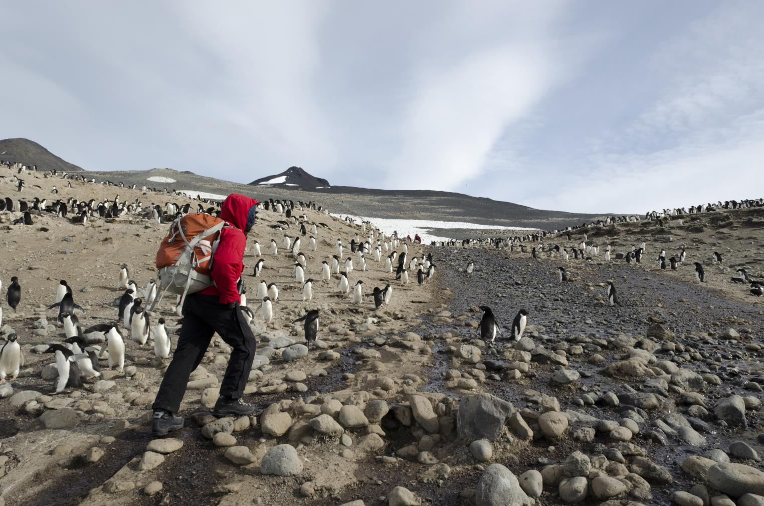 Scientists walks among penguins