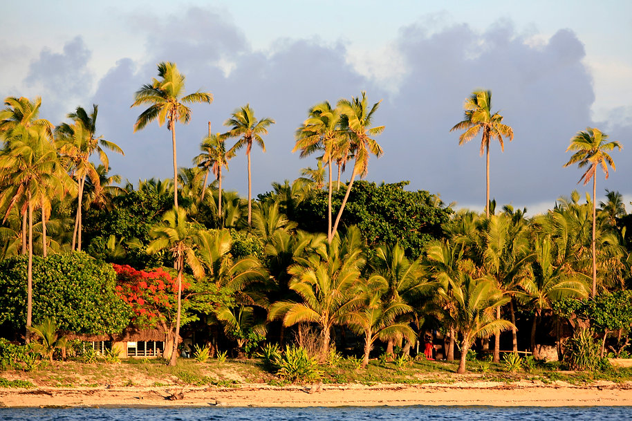Nonu Samoa palms