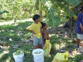 Nonu Samoa 2003 out collecting fruit