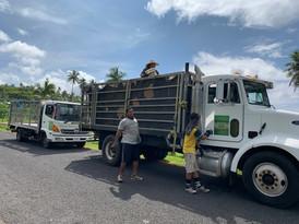 Nonu Samoa trucks out