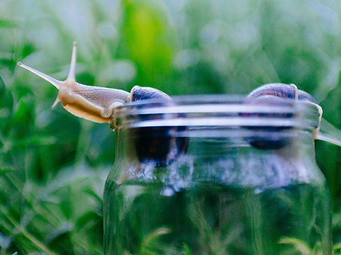 snail_small_unsplash.jpg
