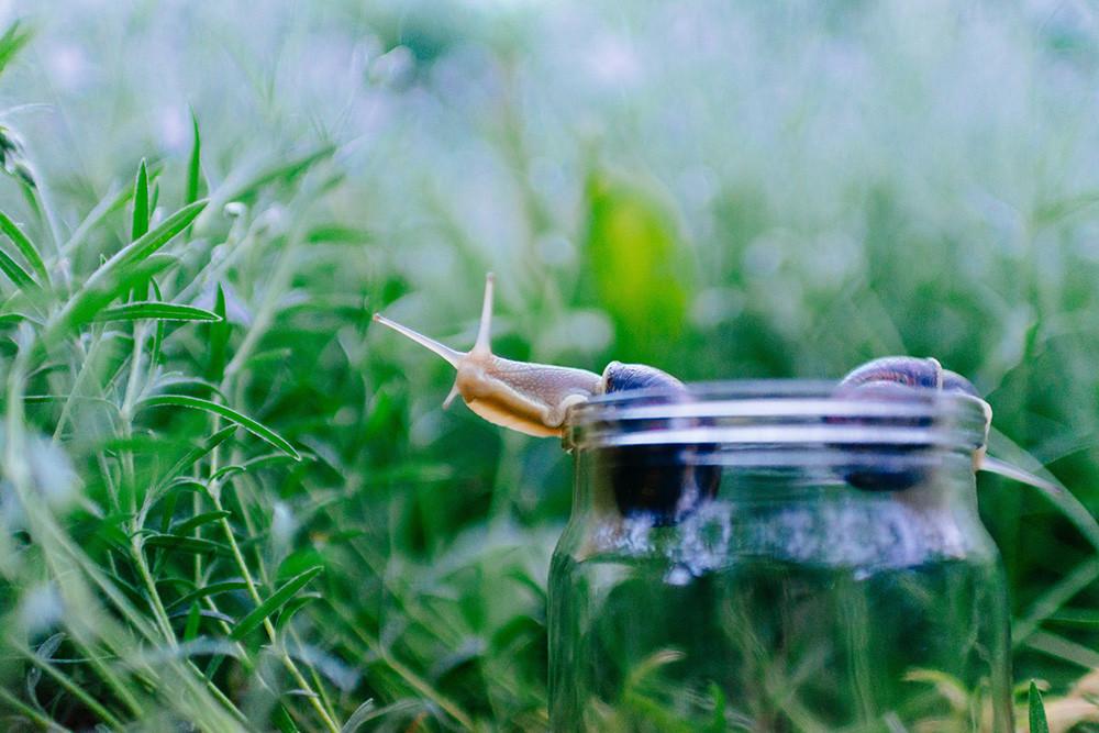 Two snails in a jar in a field