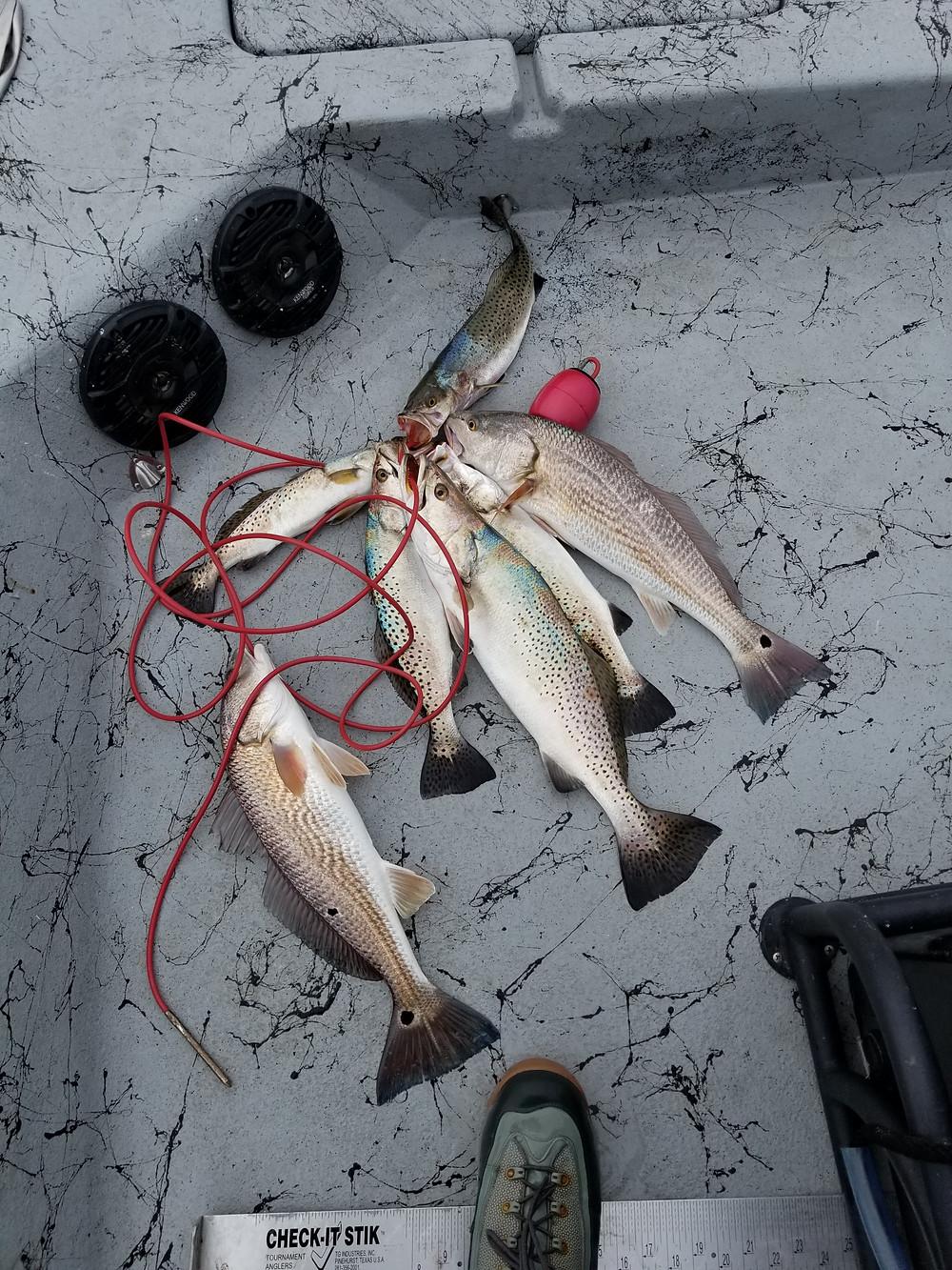 Laguna Wade Fishing
