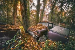 Sur un lit de feuilles