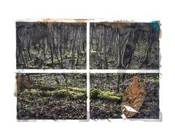 Carnet de forêt