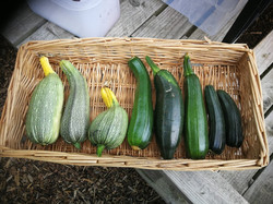 courgette%20line%20up_edited