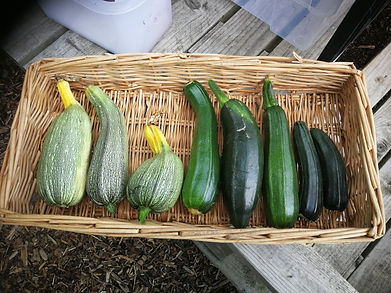 courgette%20line%20up_edited.jpg