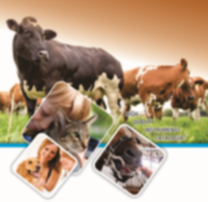 veterinario-300x291.png