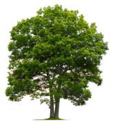 "Terumah | ""Tree of Life"""