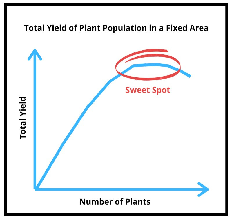 graph of yield depending on plant population