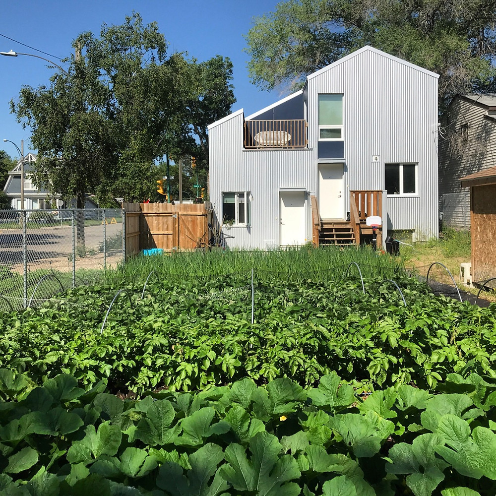 backyard homestead vegetable garden