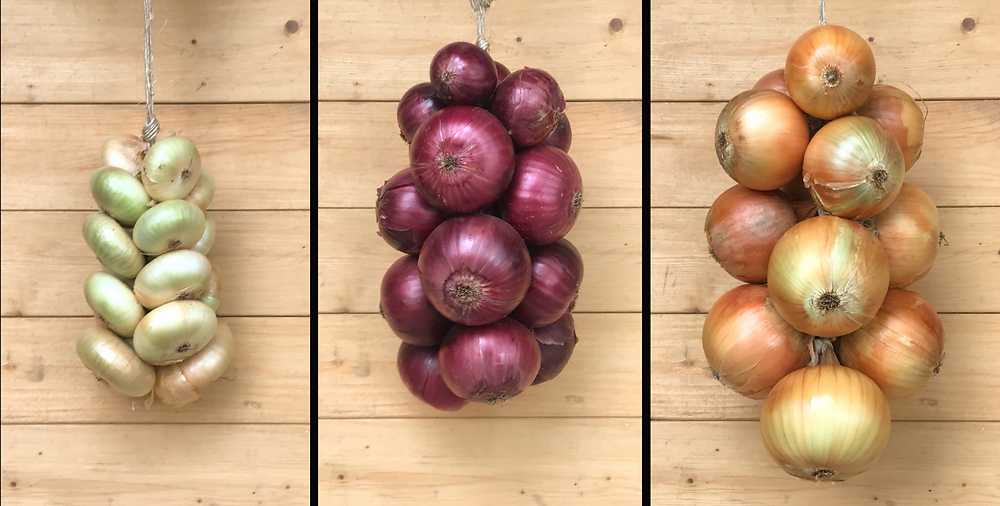Preparing onions for storage