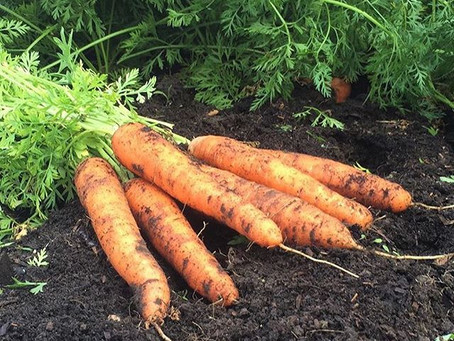 10 Lessons From the Vegetable Garden: Part 2