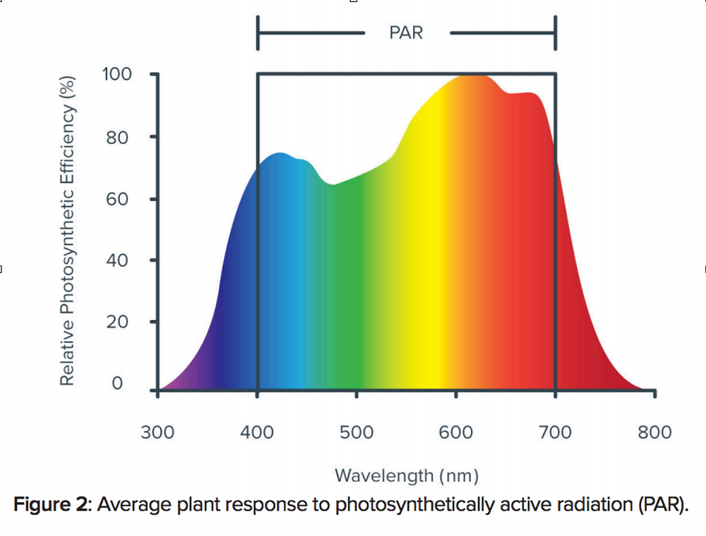 Graph of Photosynthetic Efficiency of Plants