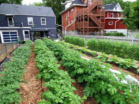 10 Lessons From the Vegetable Garden: Part 3