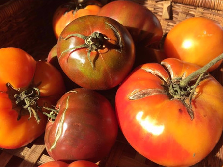 Troubles in the Tomato Patch