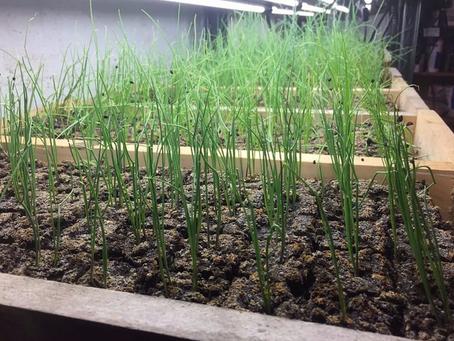 Planting Has Begun!