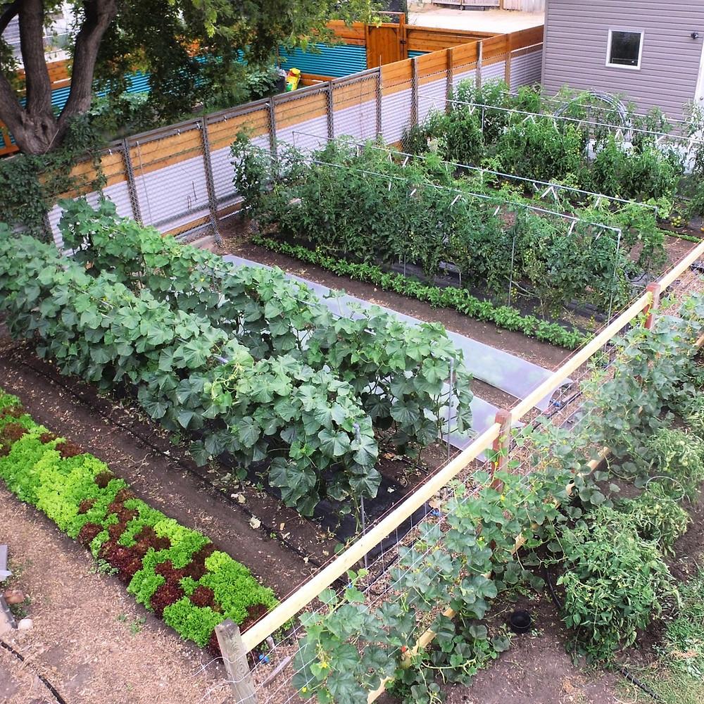 Trellises in the vegetable garden