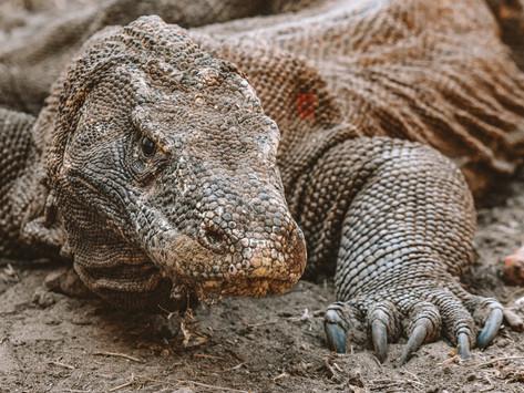 The Wonders of Komodo National Park