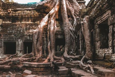 Ta Prohm Temple_2