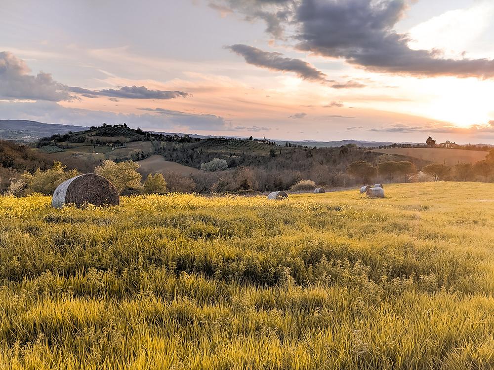 Tuscany Meadow