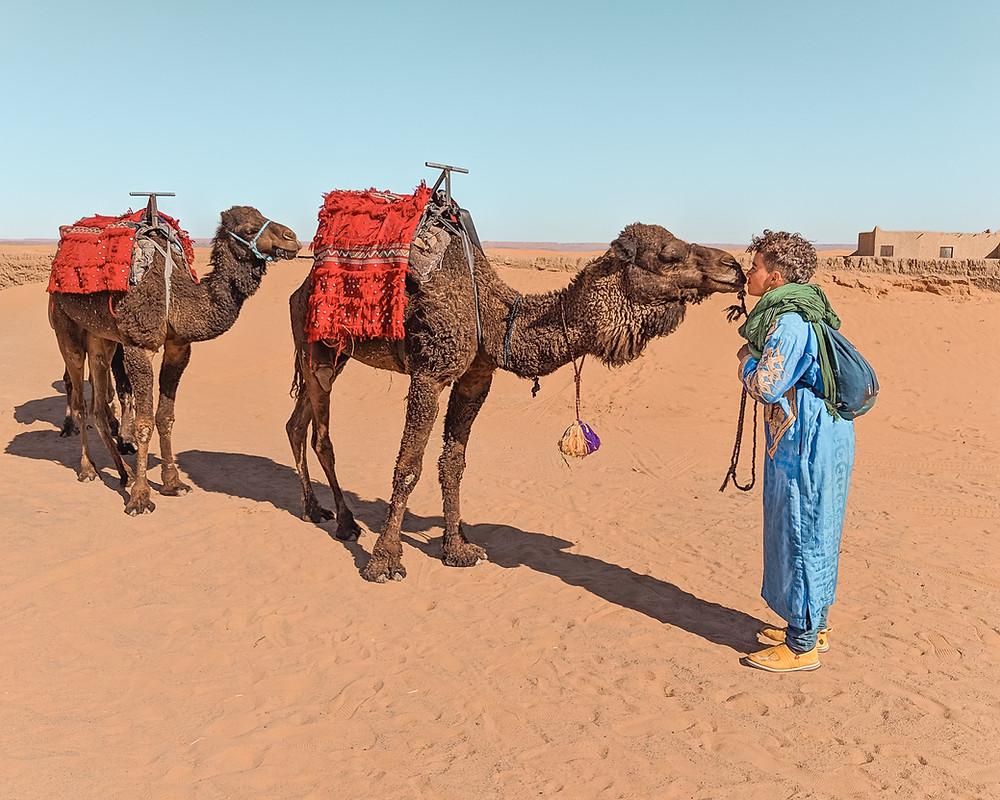 Camel Kisses