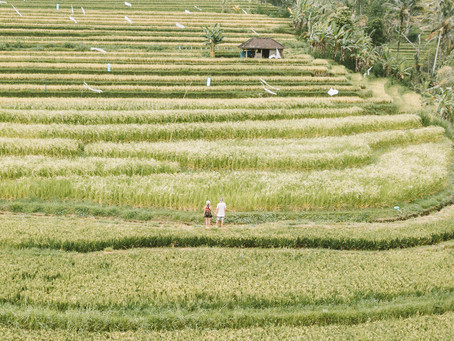Experience Ubud with The Purist Villas