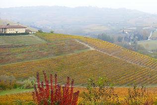 Weinreise Piemont Weinberge