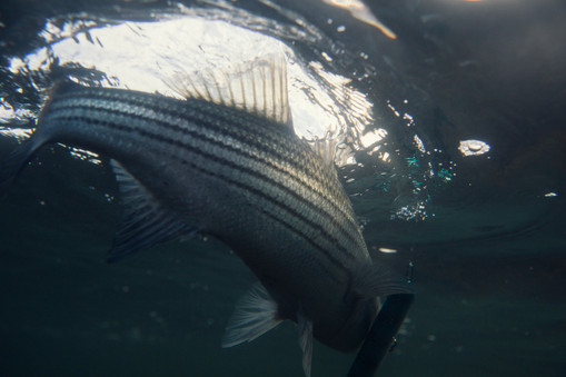 s-fish1.jpg
