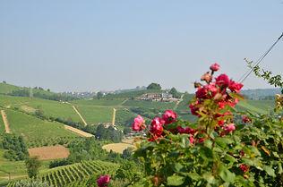Eina Landschaftsbild aufgenommen in der Umgebung von La Morra im Piemont im Juni