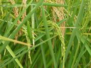 Reis Produzent